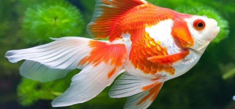 Giải mã giấc mơ thấy cá báo hiệu điều gì?
