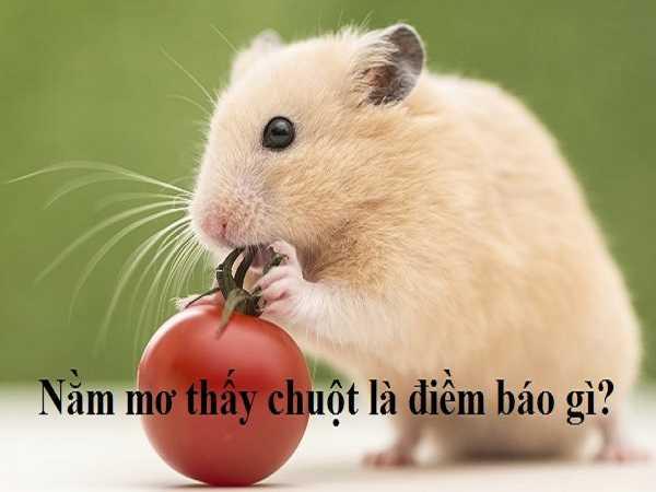 Tổng hợp ý nghĩa giấc mơ thấy chuột