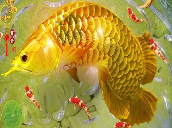 Mơ thấy cá chép có ý nghĩa gì, nên đánh con nào?