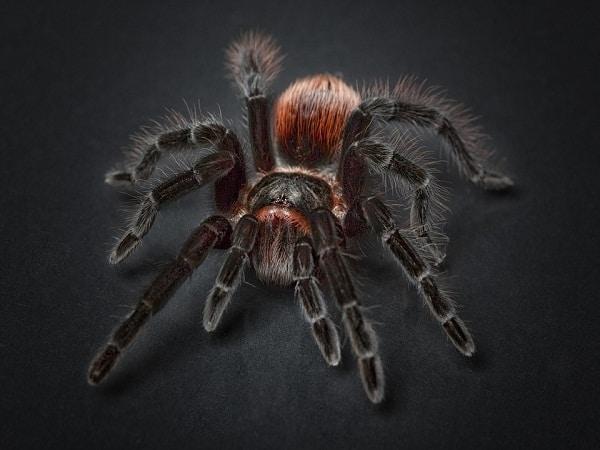 Nằm mơ thấy nhện là điềm báo điều gì?