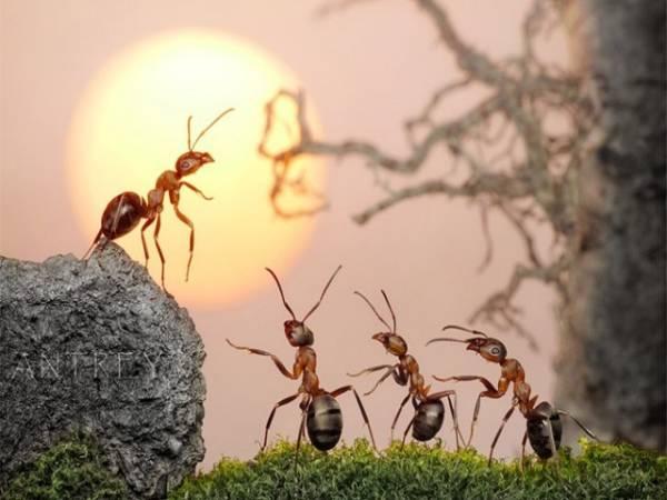 Mơ thấy con kiến đánh con gì? Giải mã điềm bão mộng thấy kiến
